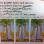 funny incorrect pupil student learner answers 5